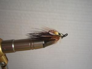 T-Shrimp