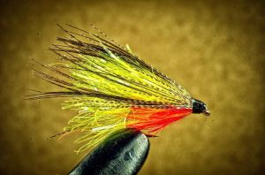 Yellow vampire dabbler