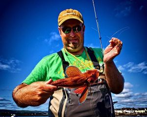 Gurnard on soft plastics with Kuba