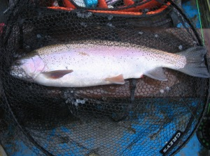 A quality Vantry trout