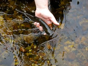 NWAngS Mourne Trout 3